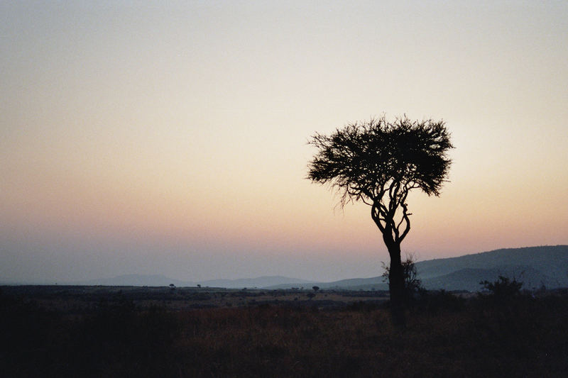 Sonnenaufgang in der Masai Mara