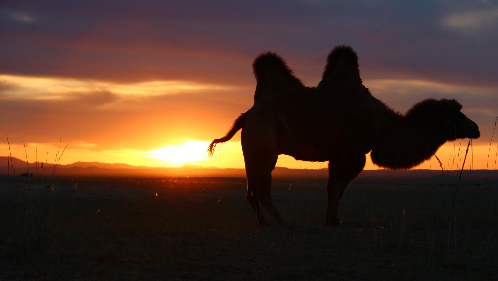 Sonnenaufgang in der Mongolei I