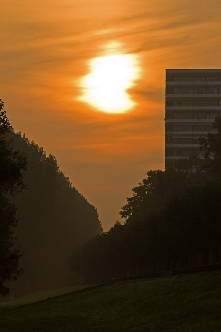 Sonnenaufgang in der Rheinaue