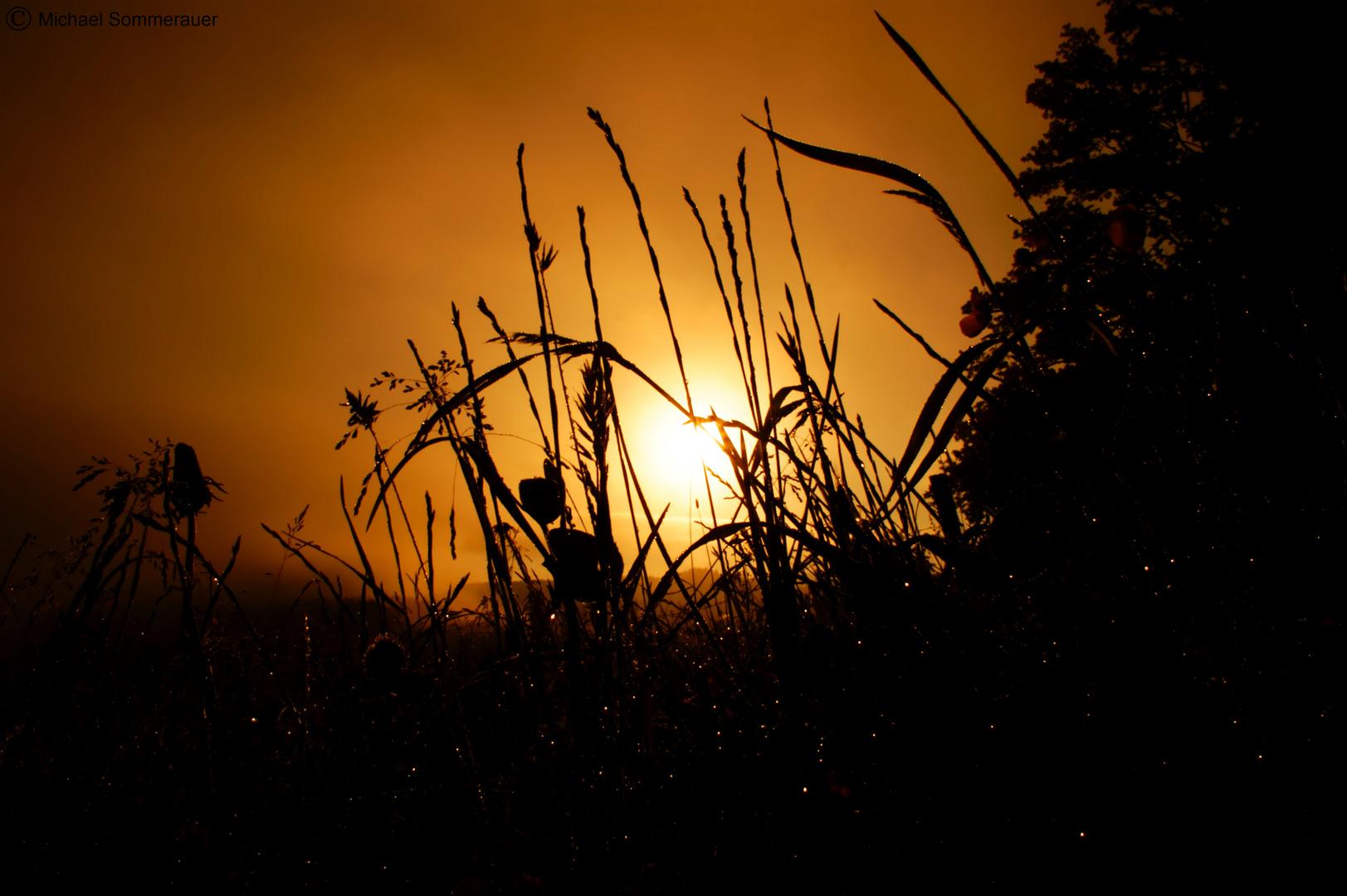 Sonnenaufgang in der Wiese
