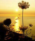 Sonnenaufgang in Sardinien II
