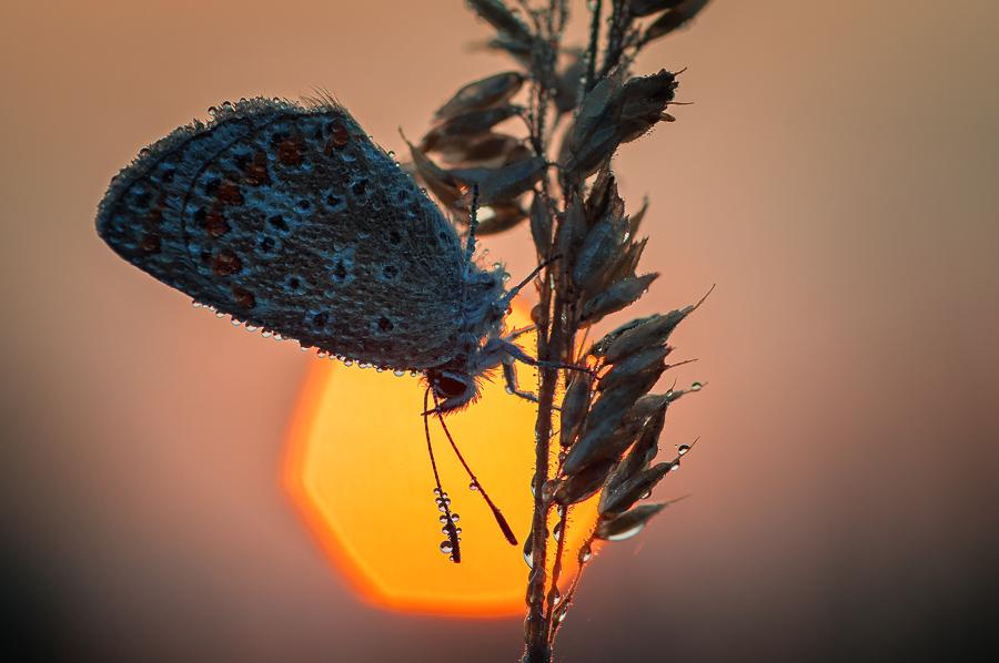Sonnenaufgang mit Bläuling