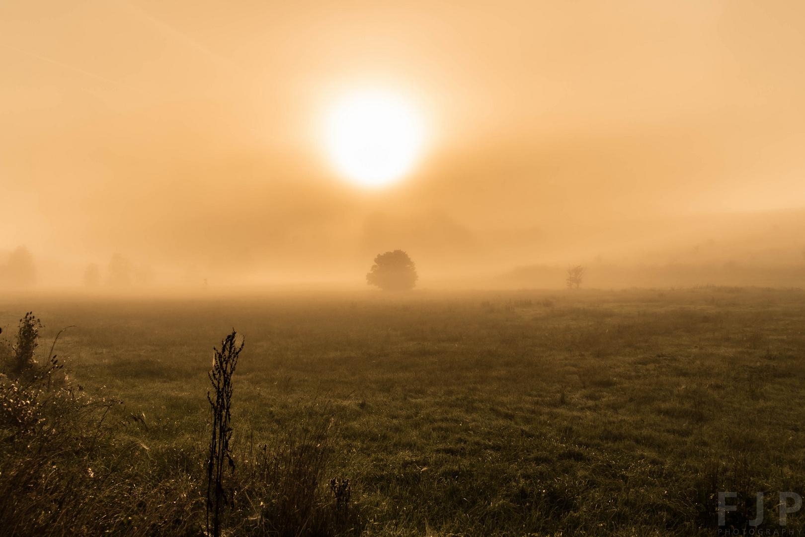 Sonnenaufgang mit Morgennebel