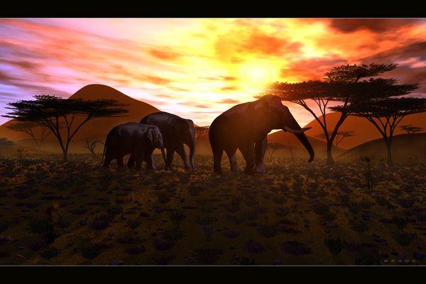 Sonnenaufgang über Afrika ...