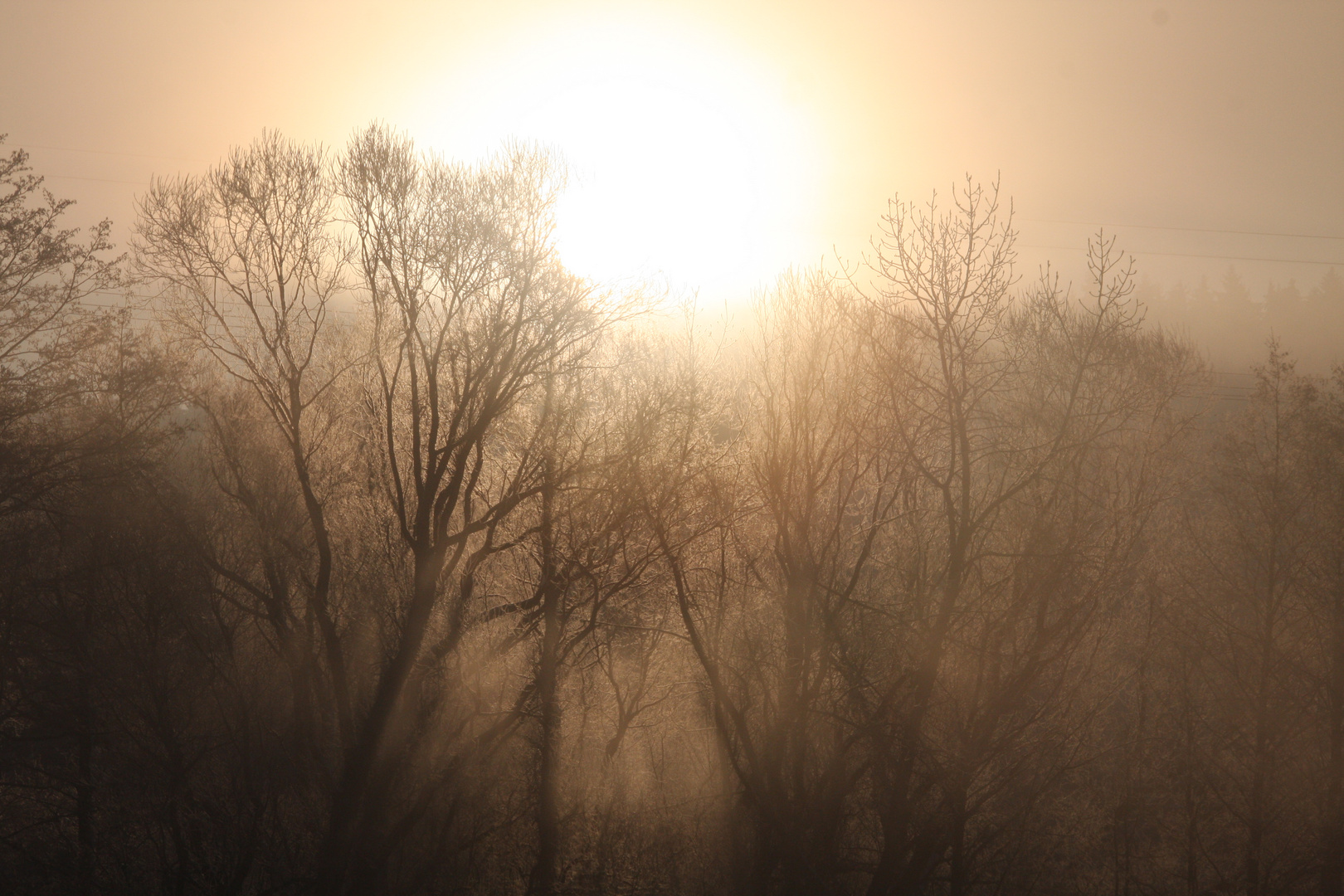 Sonnenaufgang über dem Wald