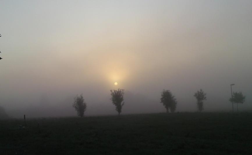 Sonnenaufgang über der Wiese