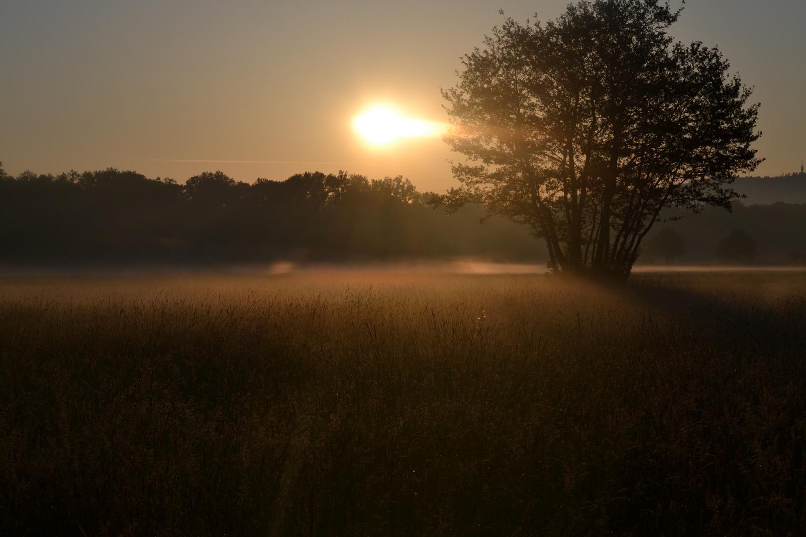 Sonnenaufgang über Wiesenlandschaft