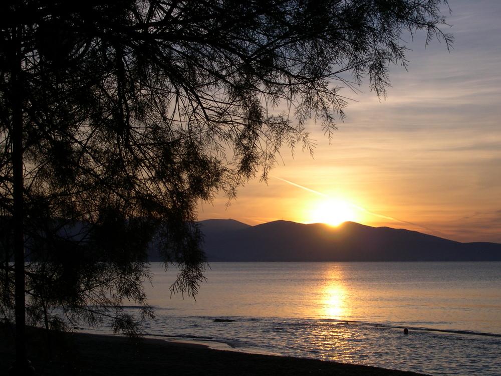 Sonnenaufgang unter einer Kiefer