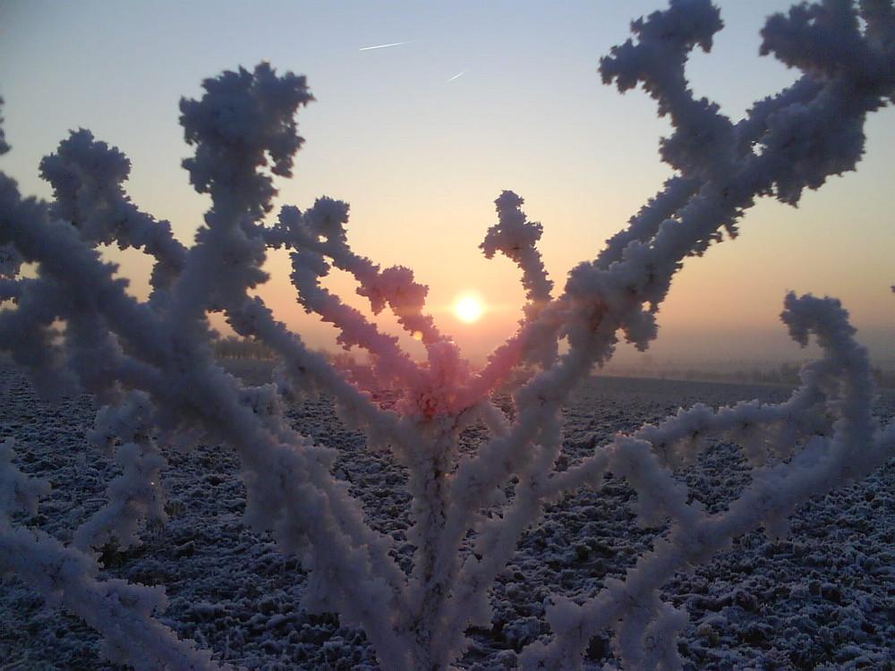 Sonnenaufgang zu Silvester 2008