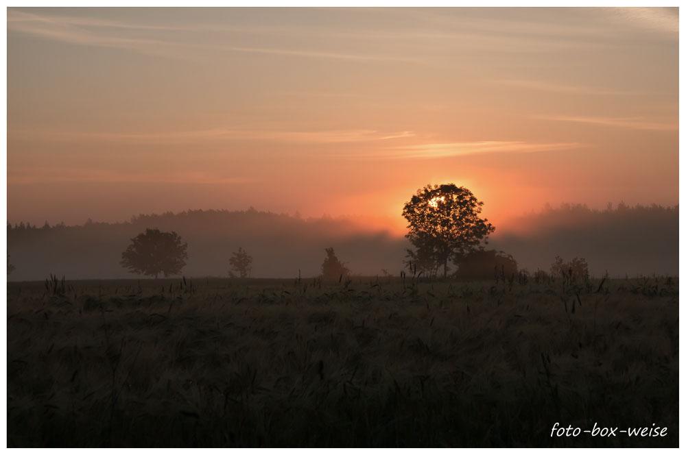 Sonnenaufgang zur Sonnenwende (2)