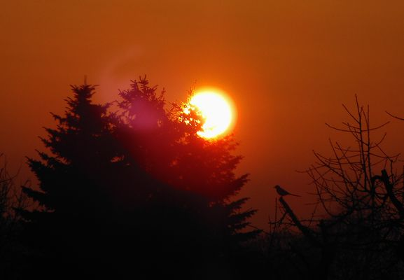 Sonnenaufgangs Beobachter