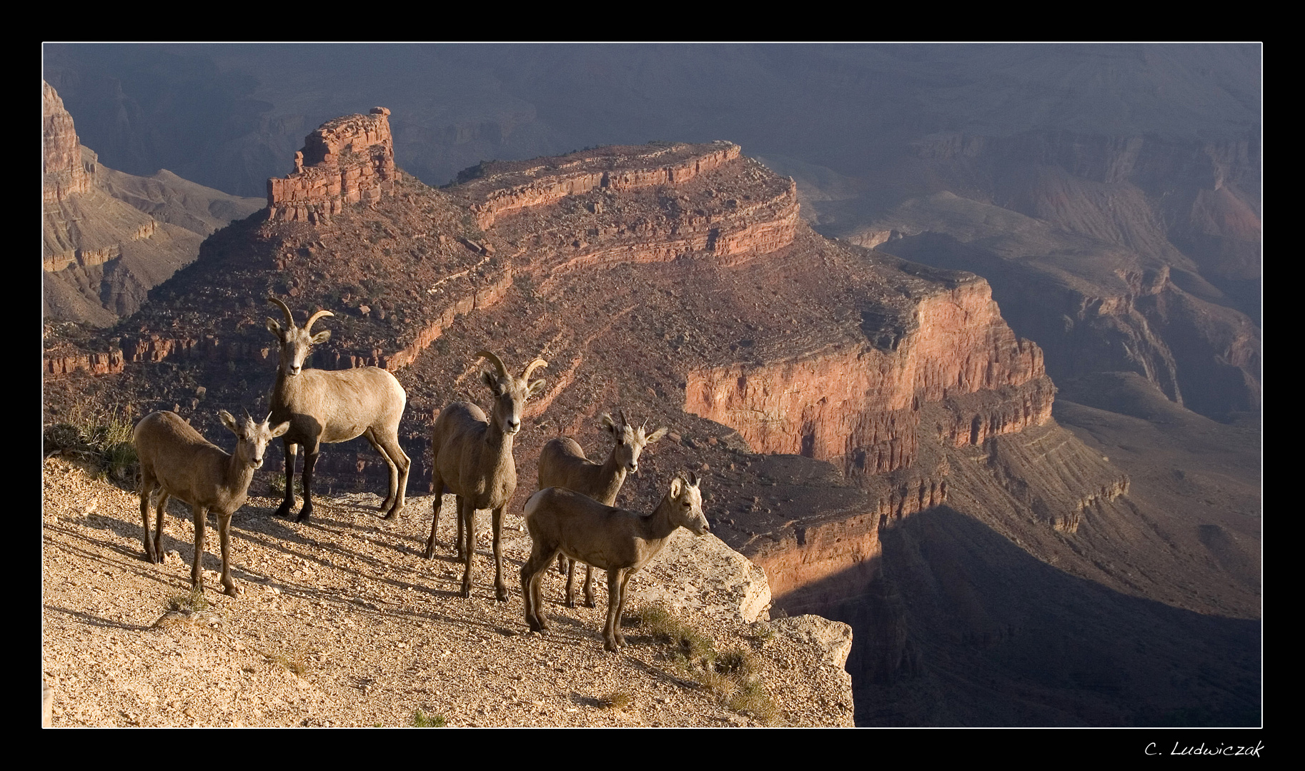 Sonnenbad am Grand Canyon