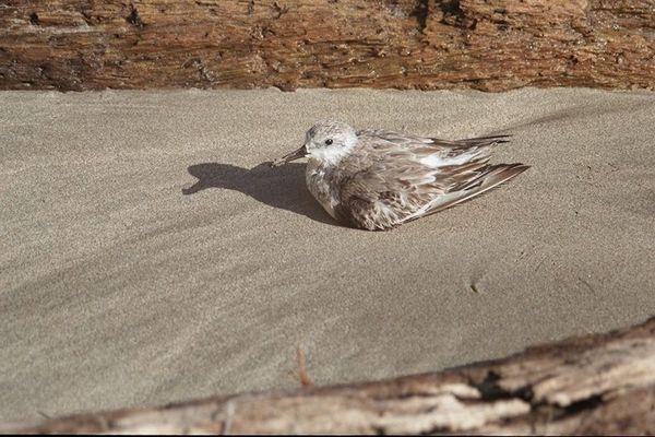 Sonnenbad am Strand