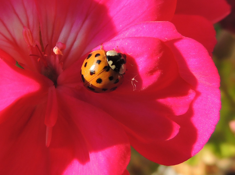 Sonnenbad auf der Blüte