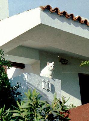 Sonnenbad der Katze