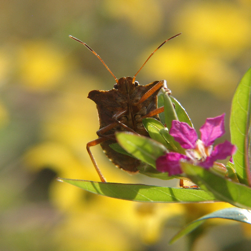 Sonnenbad eines Käfers