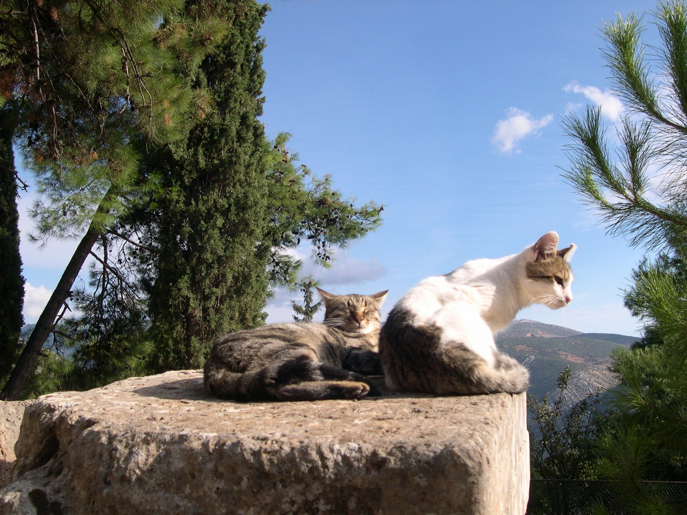 sonnenbadende 4-Pföter