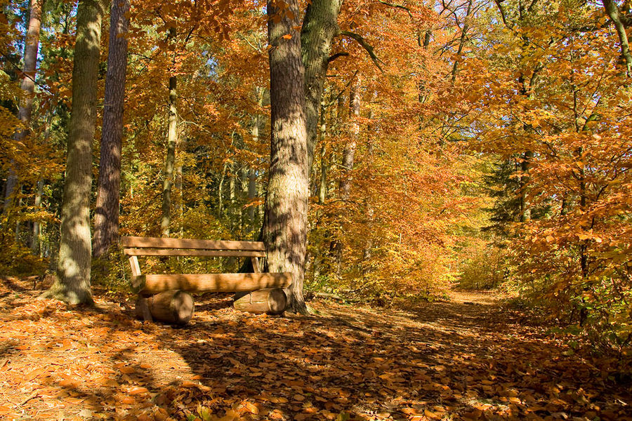 Sonnenbank im Herbstwald