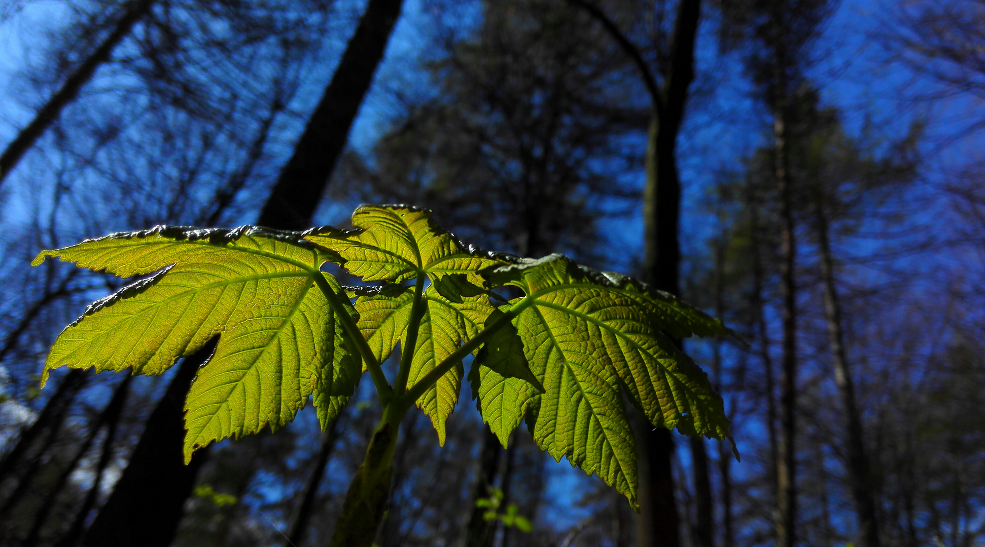 Sonnenblatt Foto & Bild | techniken, kamera-techniken, handy-fotos ...