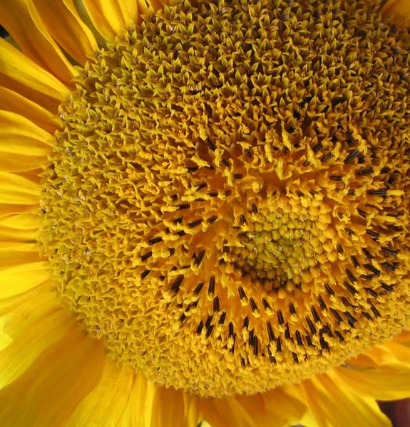 """Sonnenblume """" 2. Teil"""""""