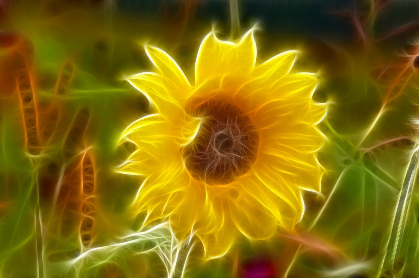 Sonnenblume a la Fractalius