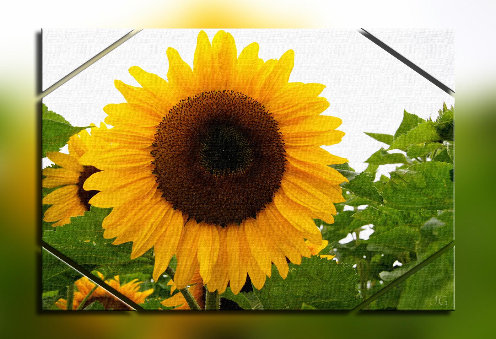 Sonnenblume auf Leinwand