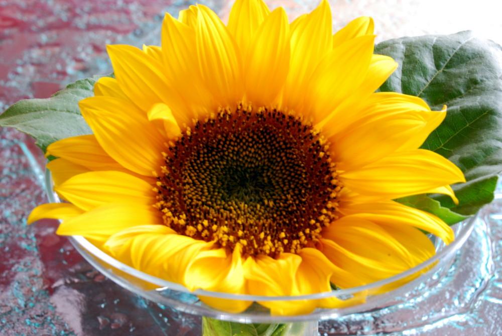 Sonnenblume ... die letzte in diesem Jahr