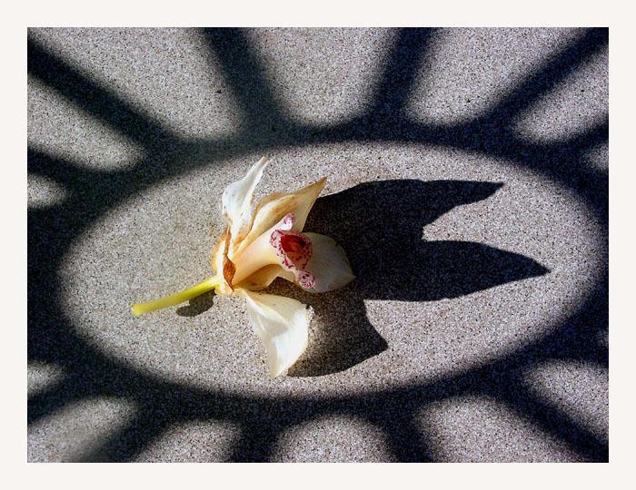 ...Sonnenblume...