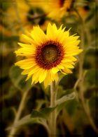 ~Sonnenblume IV~