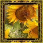Sonnenblume mit Insekt am Naschen