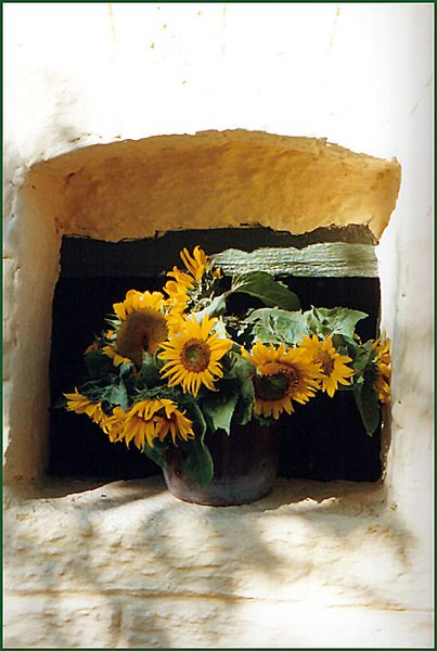 Sonnenblumen am Kellerfenster