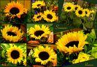 Sonnenblumen-Collage...