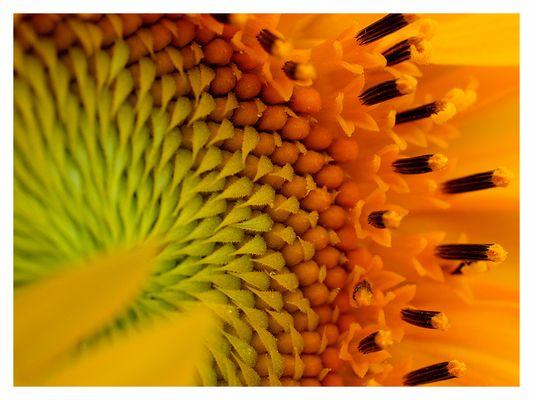sonnenblumen - kreativ