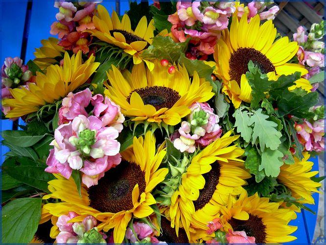 Sonnenblumen wo hin man schaut