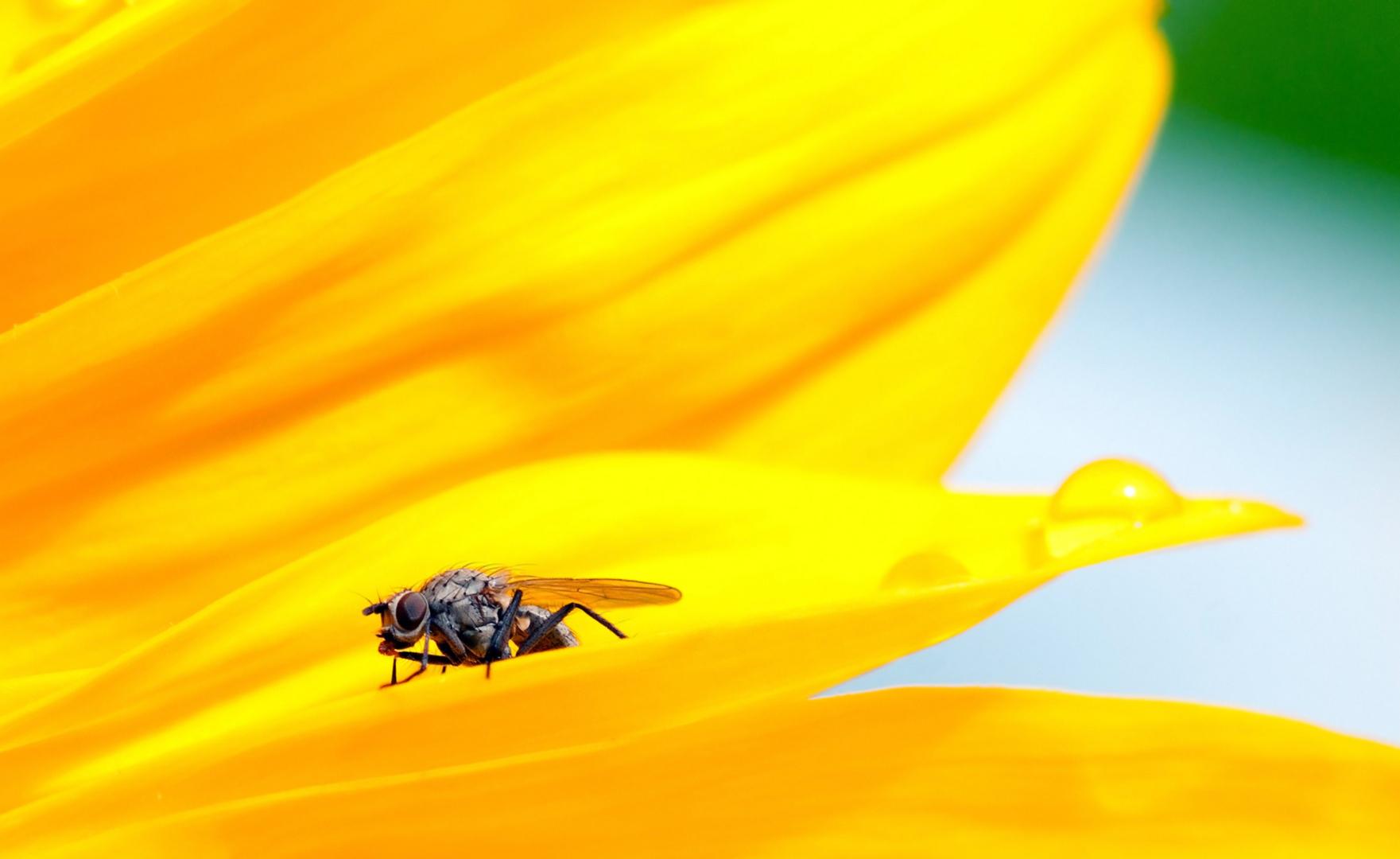 Sonnenblumenbad
