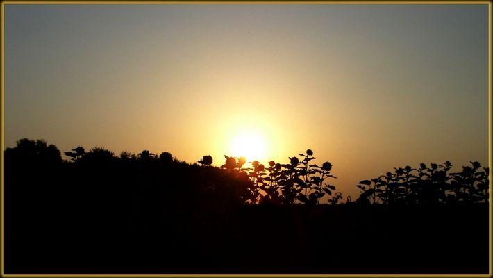 Sonnenblumenparty 2003