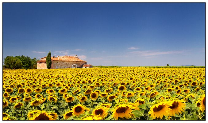Sonnenblumige Provence