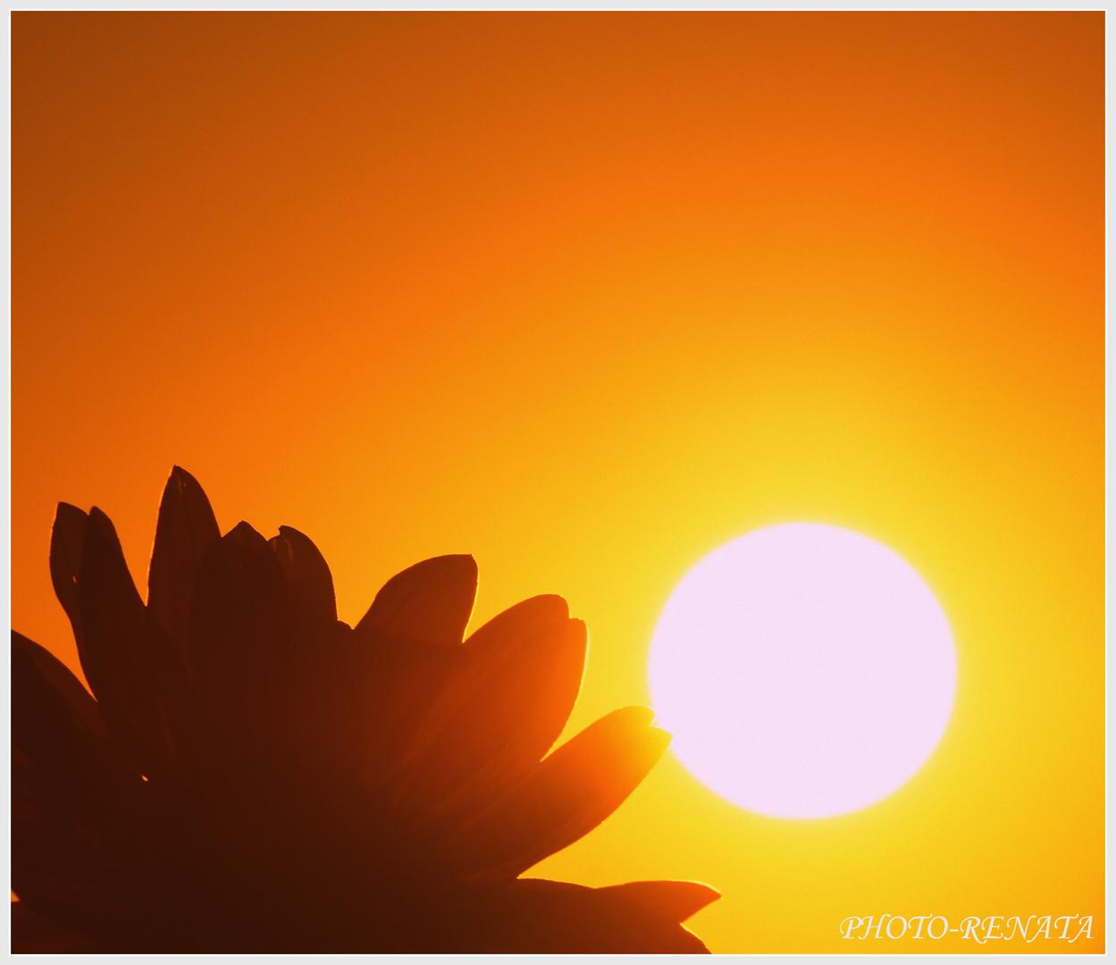 Sonnenbume und die sonne