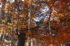 sonnendurchfluteter Herbstwald - Mit Kompositions-Diskussion