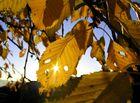 Sonnendurchschienen