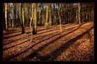 Sonneneinfall in den Eichbergen