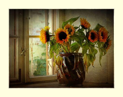 Sonnenfenster...