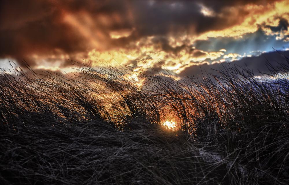 Sonnenfeuer im Strandhafer