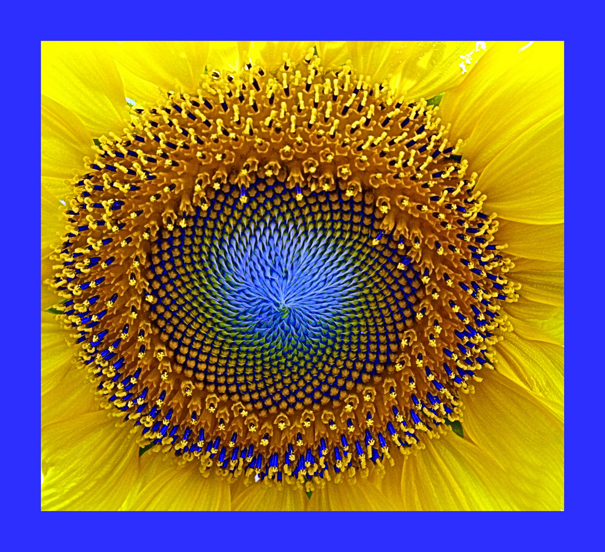 Sonnengelb & Himmelsblau