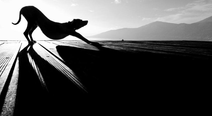 Sonnengruss Bilderrausch Fotowettbewerb