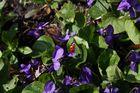 Sonnenkäfer auf Entdeckungstour