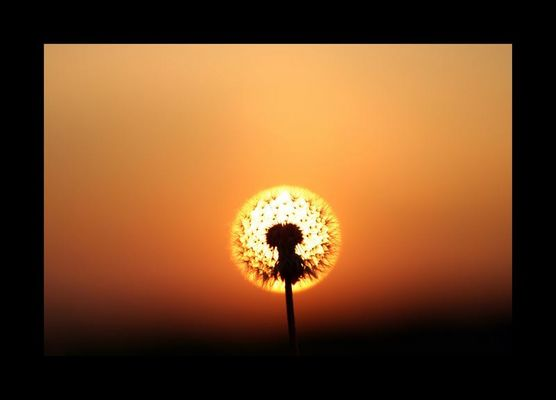 Sonnenkönig oder doch König der Löwen.....