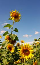 Sonnenkonserve