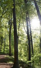 Sonnenlicht dringt durch das Blätterwerk
