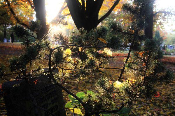 Sonnenlicht zwischen den Gräbern